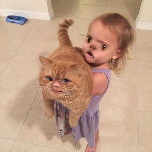 Cat Looks Pretty Though