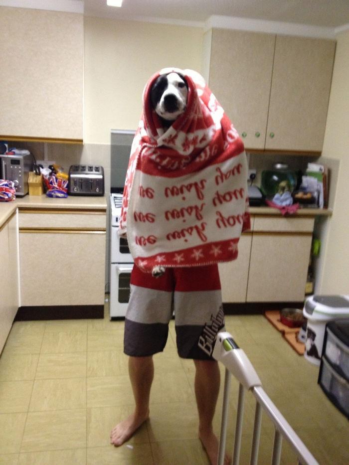 Escuché a mi marido hablando con el perro en la cocina, entré y vi esto
