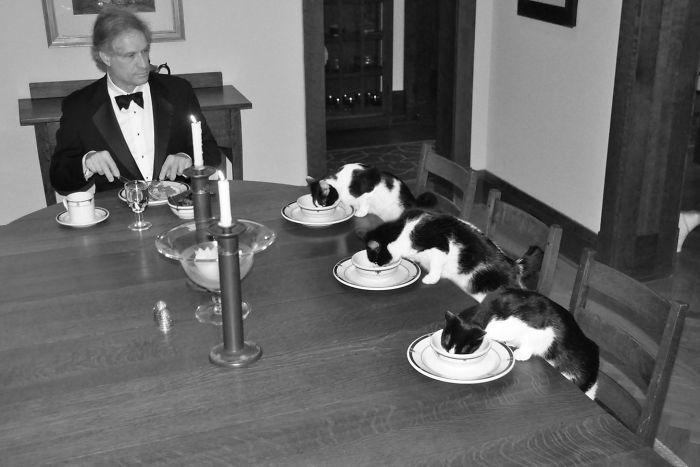 Mi esposa está de viaje y me aburro tanto que he preparado una cena formal con los gatos