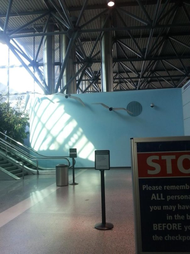 Clever Way Of Getting People To Look Directly At Camera. The Wings Flap (Oakland Airport)