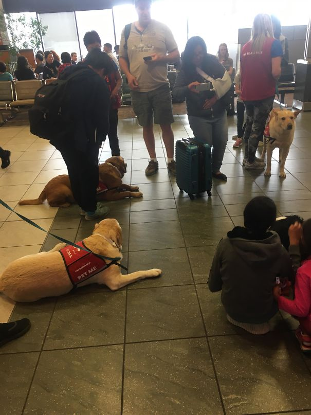 "In Canadian Airports The Have ""Pre-Board Pals"" Which Are Dogs Near Boarding Zones To Relax You Before You Fly"
