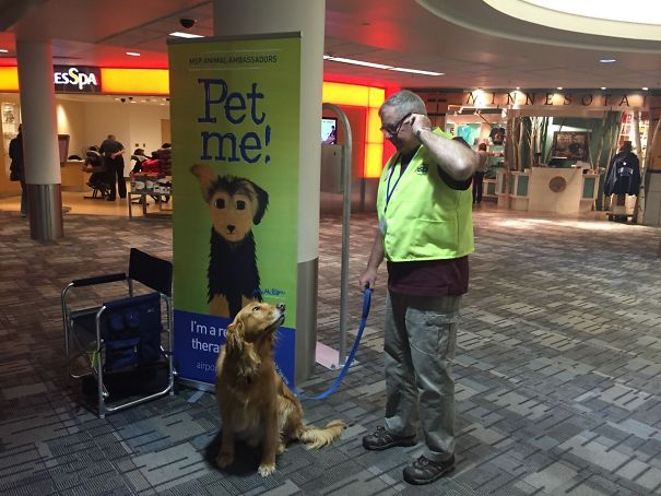 MSP Airport Has Volunteer Therapy Animals. Say Hi To Boudi