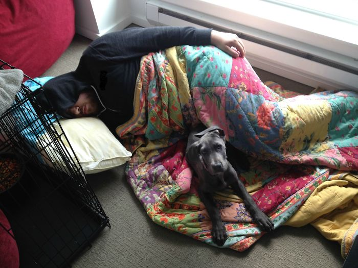 Le dije a mi novio que el perro no se iba a subir a la cama. Eligió al perro