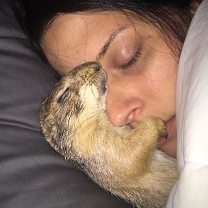 My Prairie Dog And Girlfriend Asleep