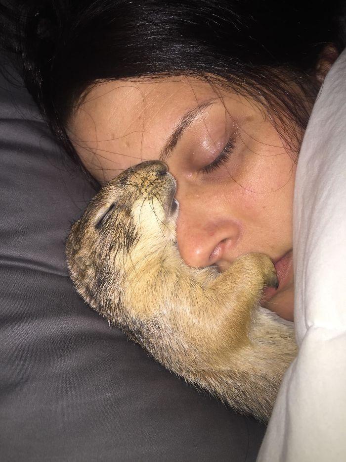 Mi perro de las praderas durmiendo con mi novia