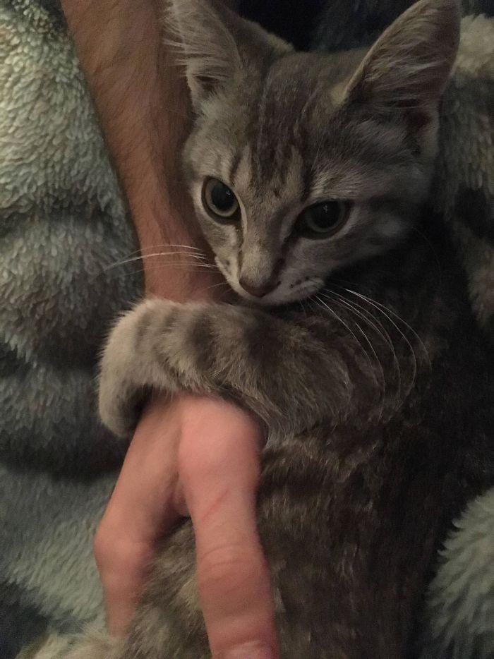 El gatito nuevo se ha encariñad con mi novio