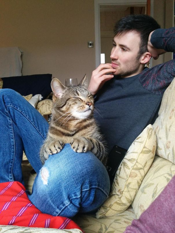 I Think My Cat Likes My Boyfriend