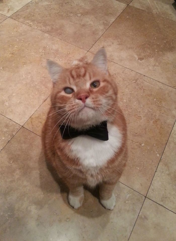 My Cat Has One Foggy Eye. Add A Bow Tie And He Instantly Becomes A James Bond Villain