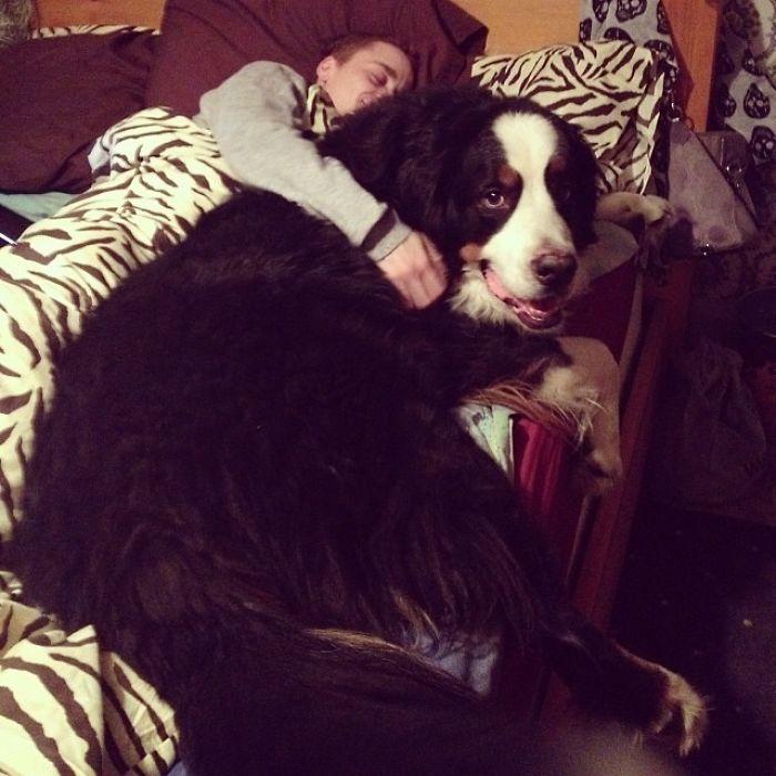 Mi perro y mi novio en la cama