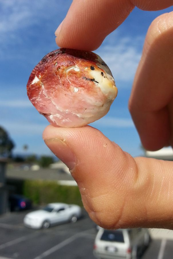 This Shell Looks Like Bacon