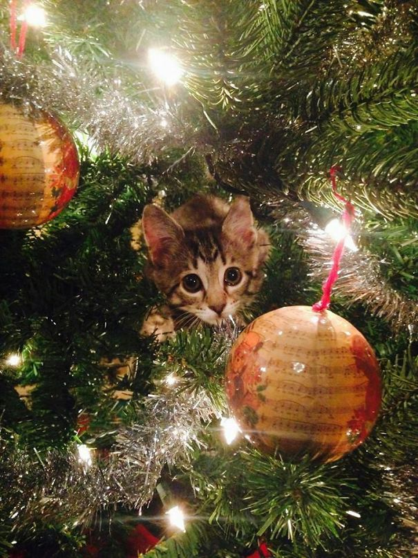 This Little Guy Just Became Our Christmas Card. Say Hi To Max!