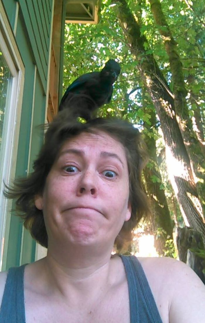 This Bird Landed On My Head, So I Assume We're Friends Now