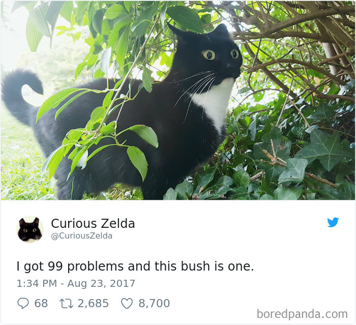 Curious-Zelda-Cat-Tweets