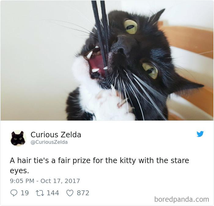 Curious-Zelda-Cat-Tweets