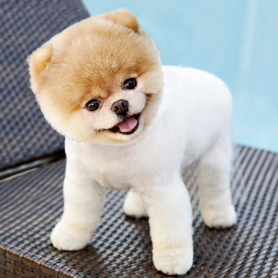 Asian-Dog-02-copy-5a0de08de83a5.jpg