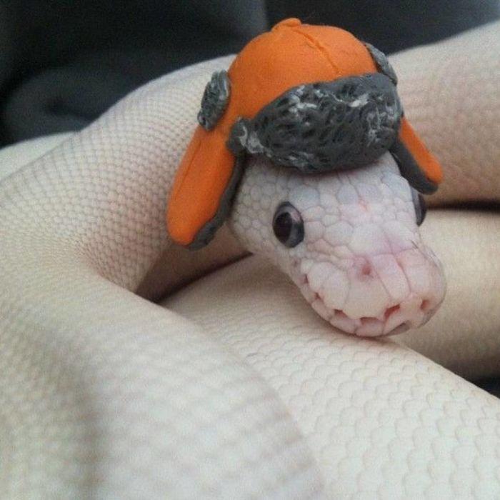 Cute Snake In A Winter Hat