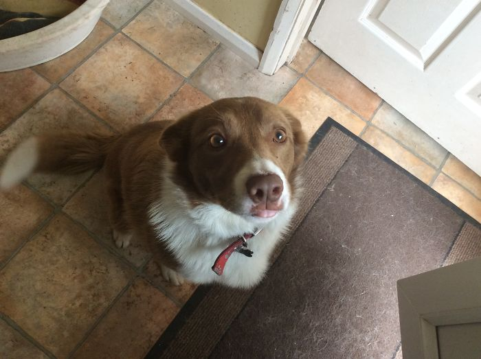 My Red Border Collie Is Called Ruby Aka, Rubes, Rubey Doobey, Pooch, Doggo, Scooby Doo, Or Just Dog