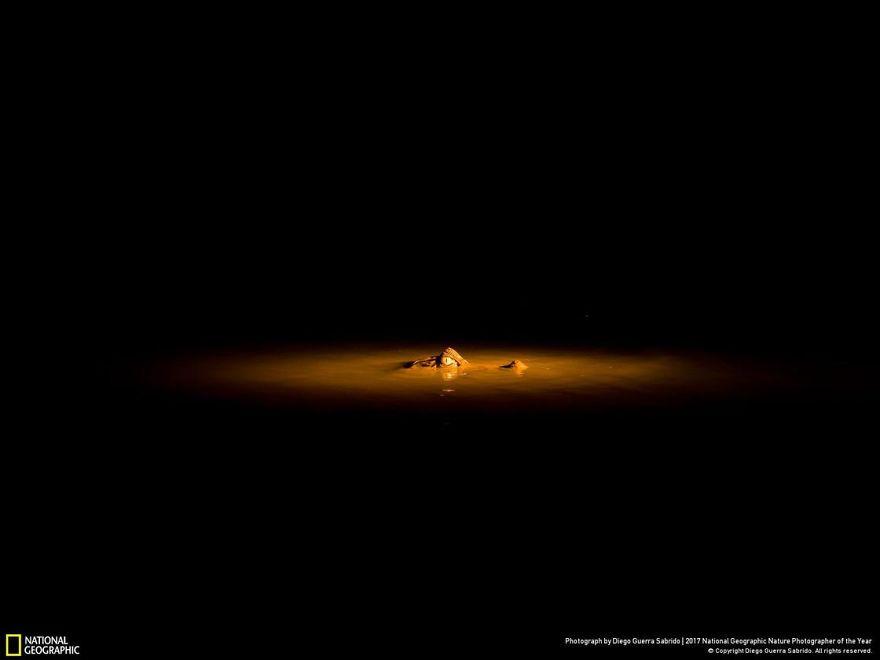 Fotos, Curiosidades, Comunicação, Jornalismo, Marketing, Propaganda, Mídia Interessante DIEGO-GUERRA-SABRIDO-5a033a269b3af__880 27 finalistas da National Geographic 2017 - categoria Natureza Fotos e fatos  finalistas da National Geographic apa: ElizabethNoftall