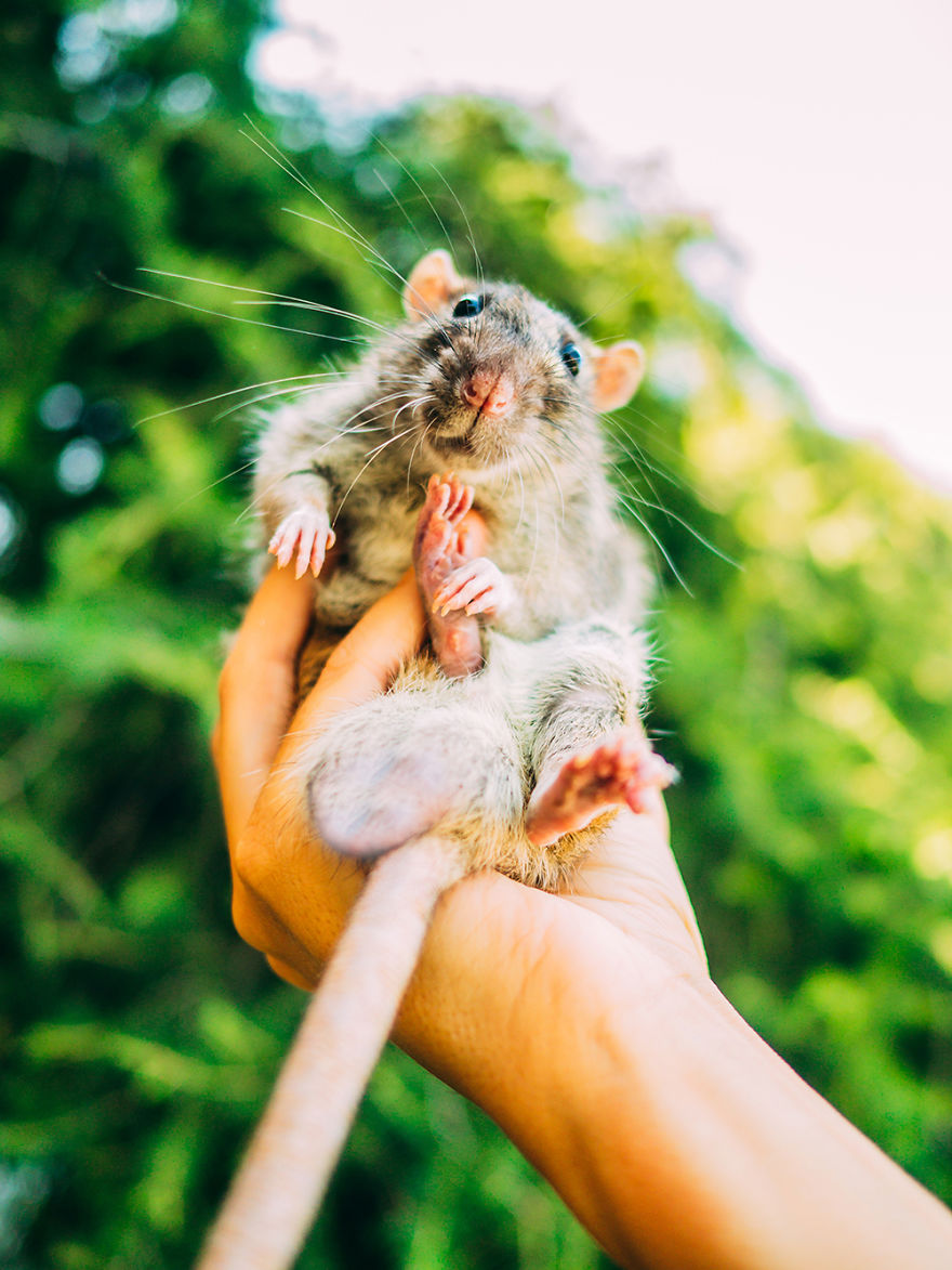 I Photographed Ex-Lab Rats And Mice Going Outdoors For The
