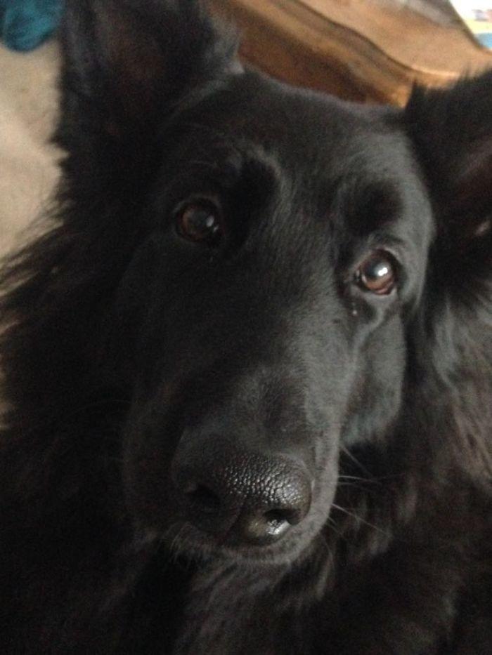 Bailey, Bay-Bays, Mutt Face, Dog Butt, Fluppy, Bailey Bear
