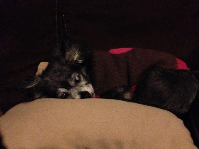 Ralphie, My Blind 18-Year-Old Dog