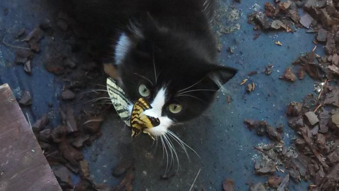 My Cat Hates Butterflies