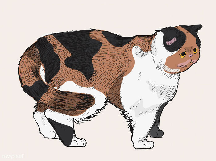 Our Designer Just Illustrated Different Types Of Cat Breeds And We Are Freaking Out By How Cute They Are