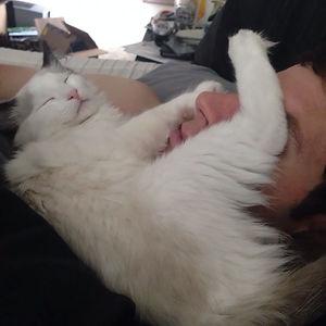 Al gato le gusta dormirse en la cara de mi novio en mitad de la noche. Me los encuentro así por la mañana