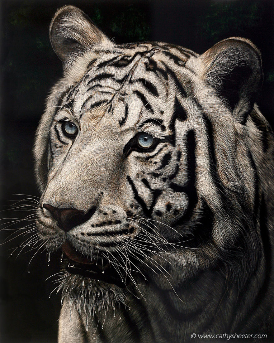 I Create Hyper-Realistic Scratch Drawings On An Ink Coated Board