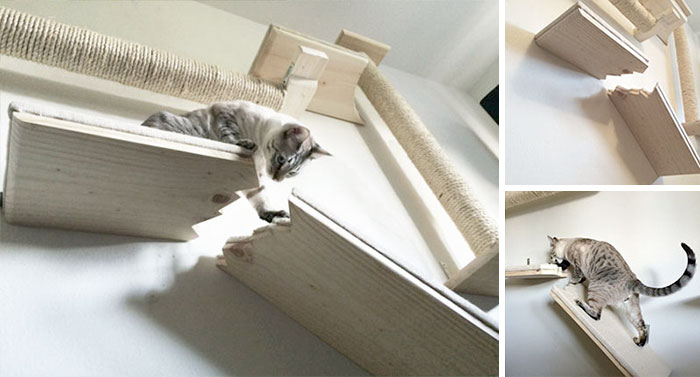 Broken Cat Shelf