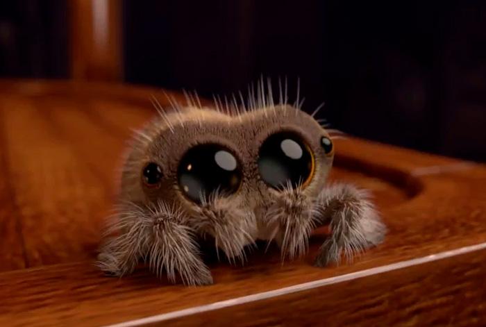 Este es Lucas, la araña más adorable que te quitará la aracnofobia