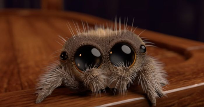 Meet Lucas The Most Adorable Spider That Will Cure Your