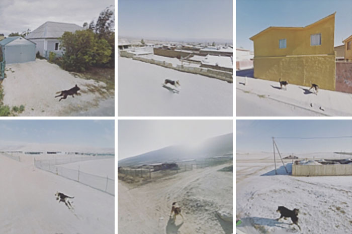 Dogs Chasing The Google Car From Around The World