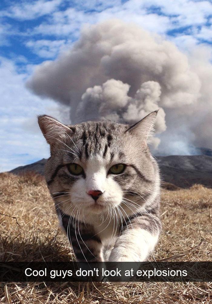 Funny Cat Snap