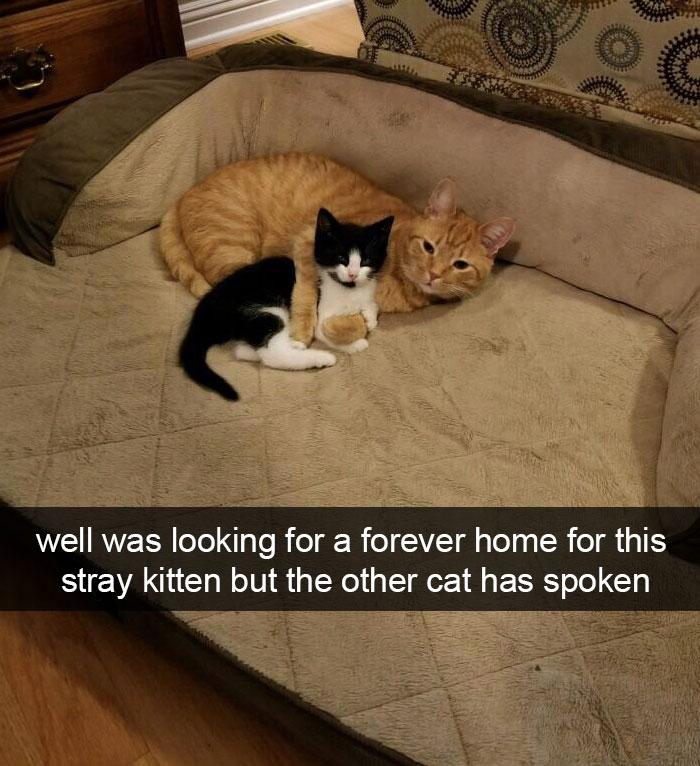 Cats-Funny-Snapchats