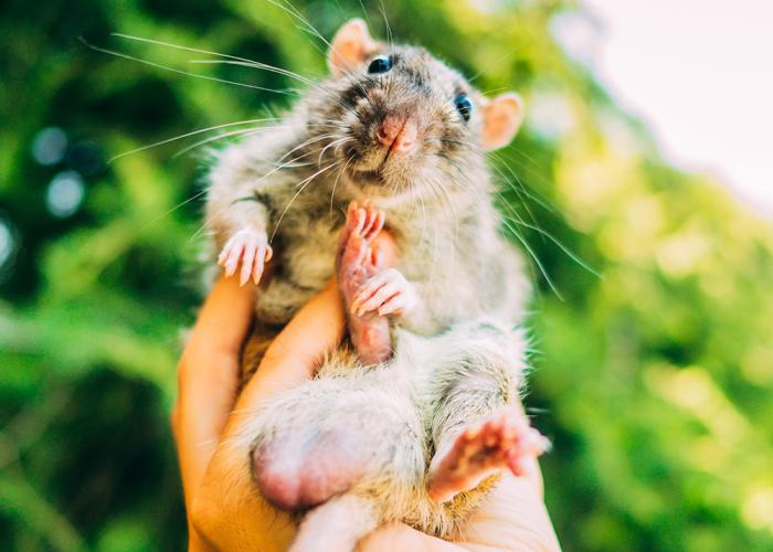 Fotografié ex-ratas de laboratorio y ratones libres por primera vez y sus expresiones lo dicen todo