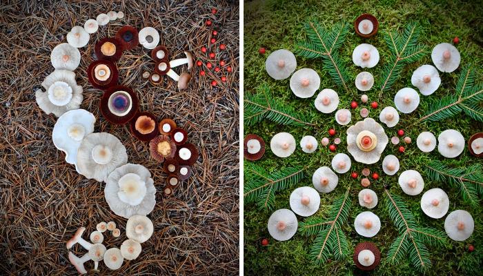I Create My Own Dream World Using Wild Mushrooms