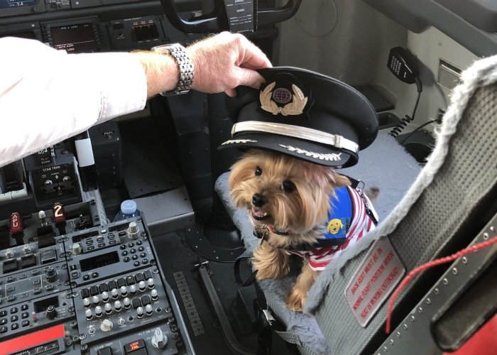 The Yorkie In The Cock-Pit Of A Boeing 747
