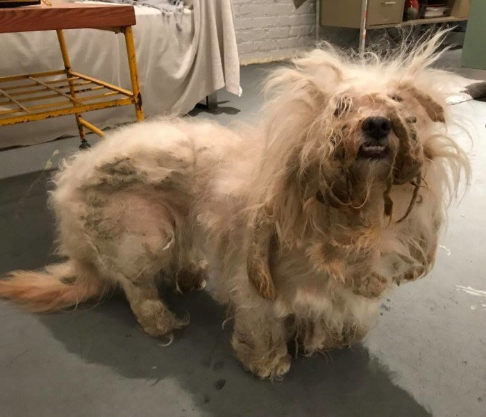 Stray Dog Can't Stop Smiling After Rescuers Shave Off His Matted Fur
