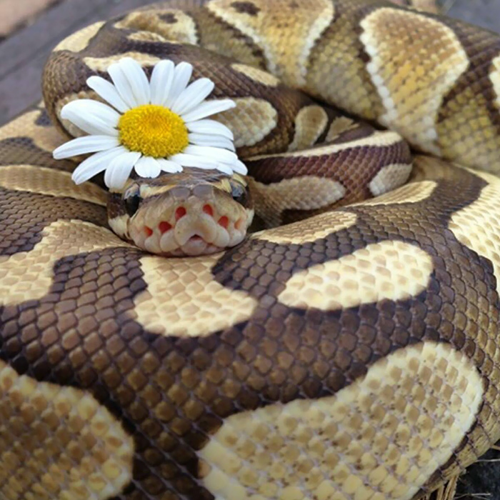 75 adorable snake pics that will help you conquer your fear bored