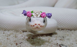 50+ Adorable Snake Pics That Will Help You Conquer Your Fear