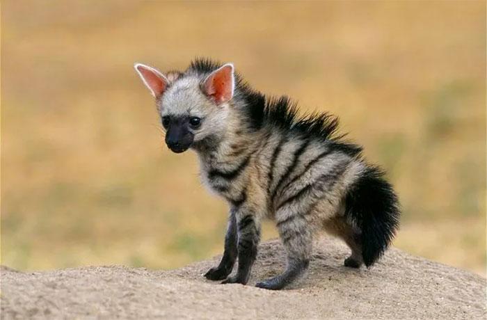 Conoce al animal más adorable que has visto nunca