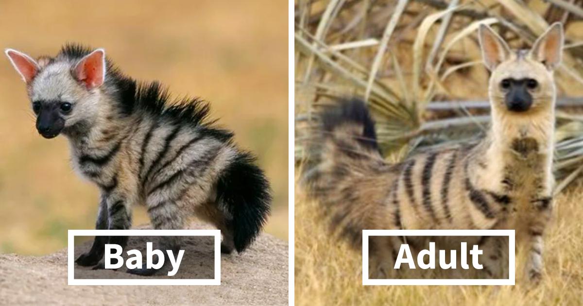 Meet The Cutest Animal You've Never Heard Of | Bored Panda  Meet The Cutest...