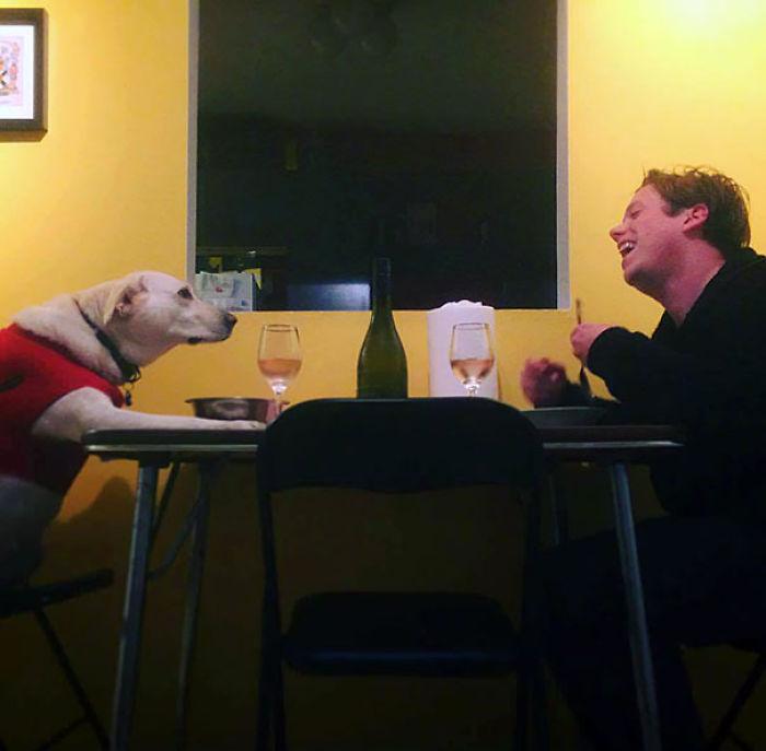 Mi novia está de viaje y el perro y yo tuvimos una gran cena