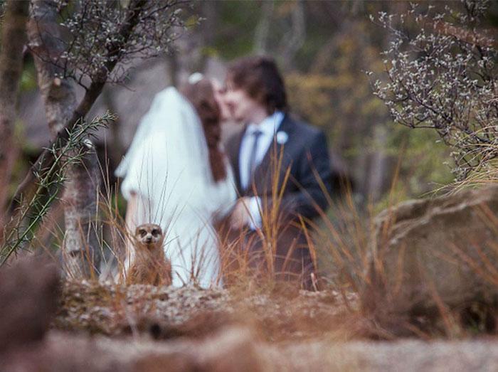Got Photobombed At My Own Wedding