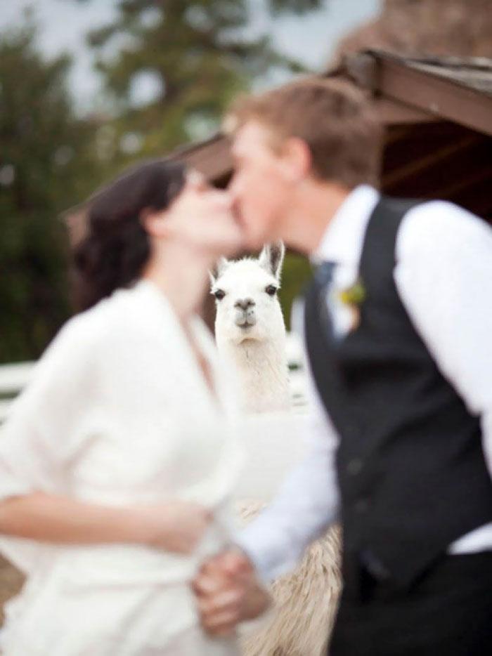 All The Focus On Llama