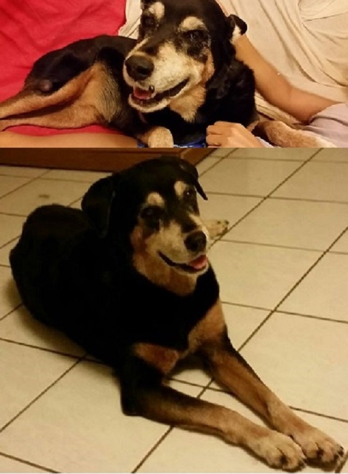 Our Senior Rescue Poi Dog Chicacita Bonita. 2nd Pic Is After My Friend Got Rid Of Her 'Juevo' How It Worked With Her Cat (Yeay!), & Removal Of A Growth & Recurring Abcess. She's Had Cataracts Since I Met Her
