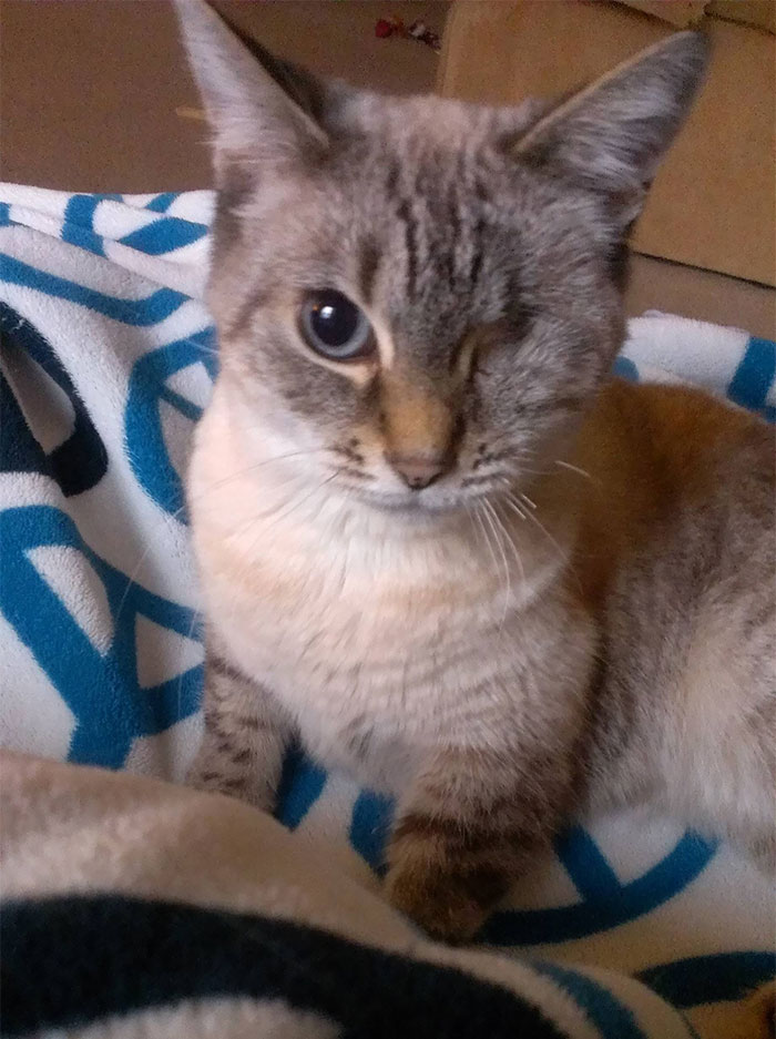 Beatrix Kiddo, My Left For Dead Kitty With An Incredible Recovery! When She Was Found, It Was Clear That She Had Severe Trauma To Her Eye. She Also Had A Fractured Pelvis, A Cracked Sternum, And Muscular Damage To Her Front Right Arm