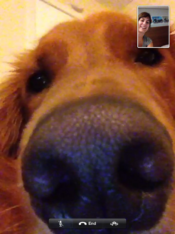 My Dog Wanted To Skype With My Girlfriend
