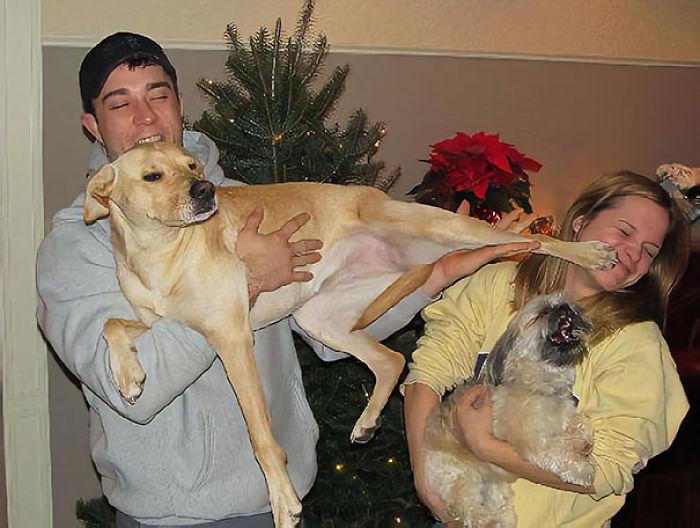 Este perro tiene celos de la novia de su dueño